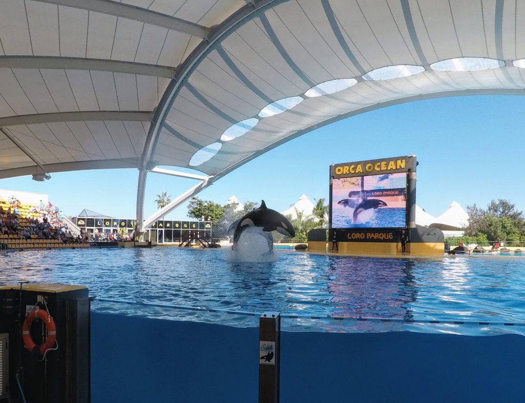 Kosatky v Loro Parque
