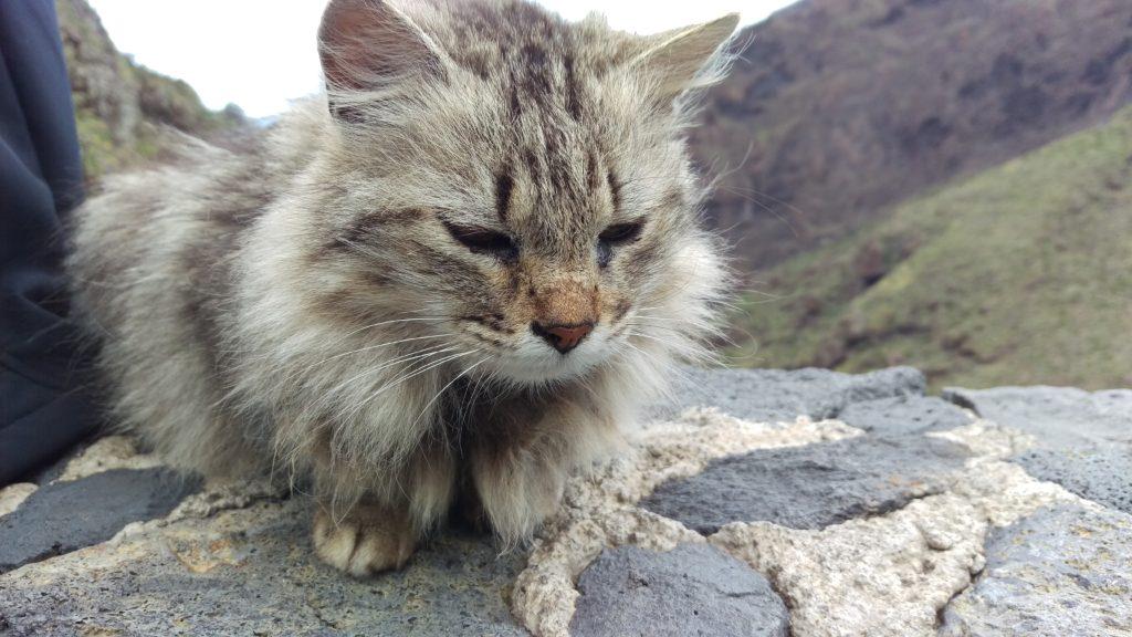 Masca - krmení koček zakázáno!